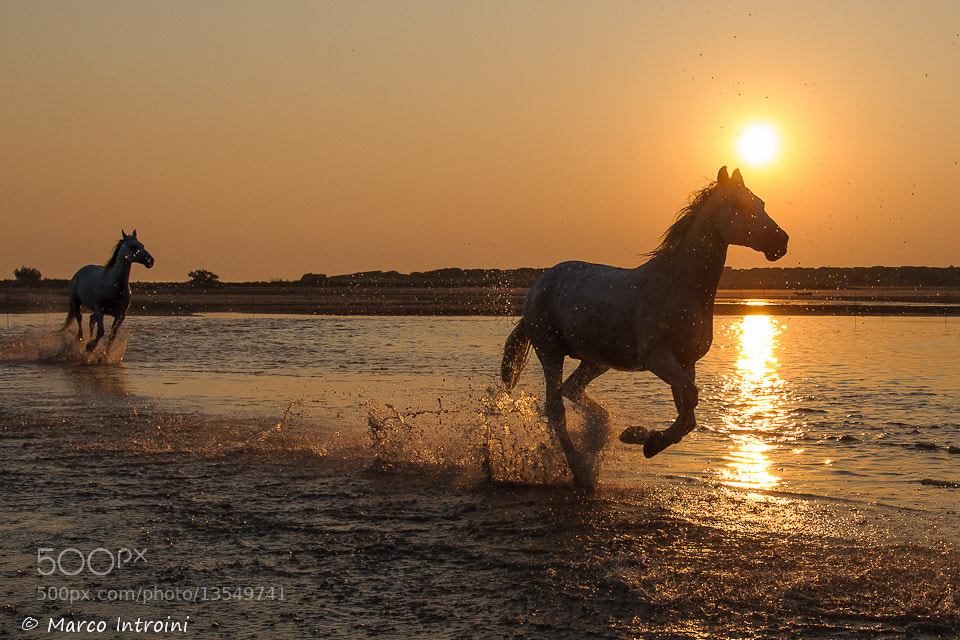 Photograph Horses at sunset by Marco Introini on 500px