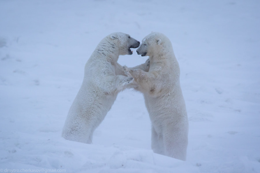 Snow Fight
