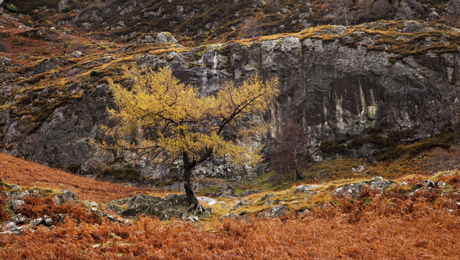 Watendlath Autumn tree and bracken
