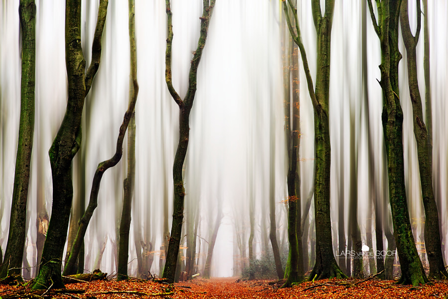Photograph forest from times gone by by Lars van de Goor on 500px
