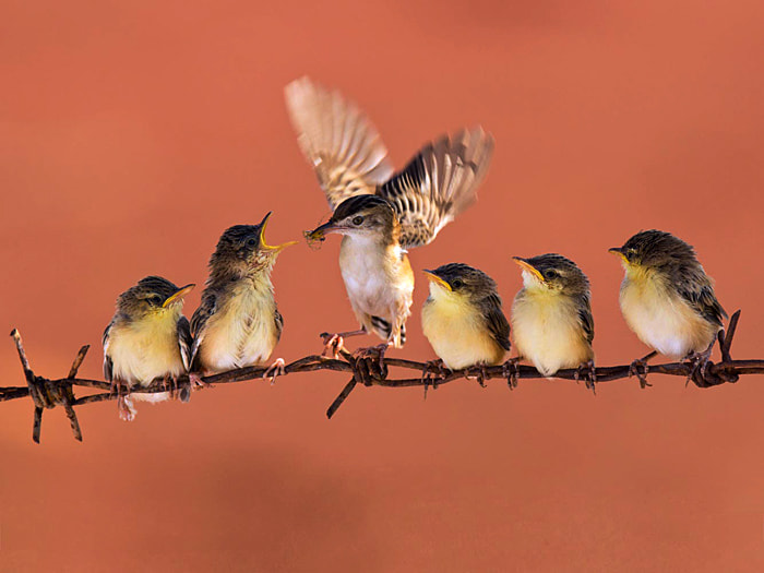 Photograph Big Family by Iwan Tirtha on 500px
