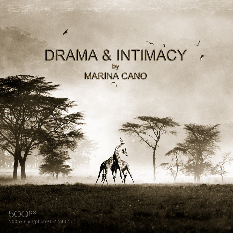 Photograph Drama & Intimacy by Marina Cano on 500px
