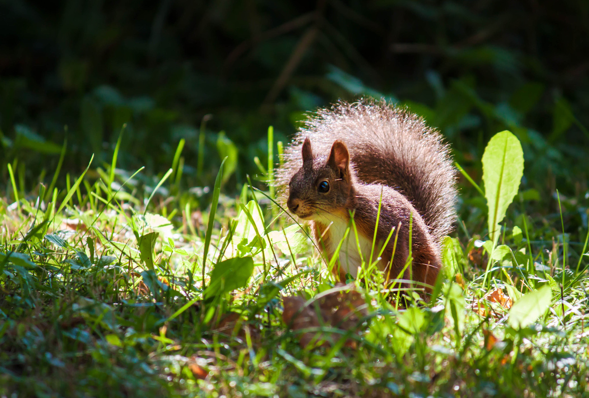 Photograph Squirrel in contre-jour by Tatiana K on 500px