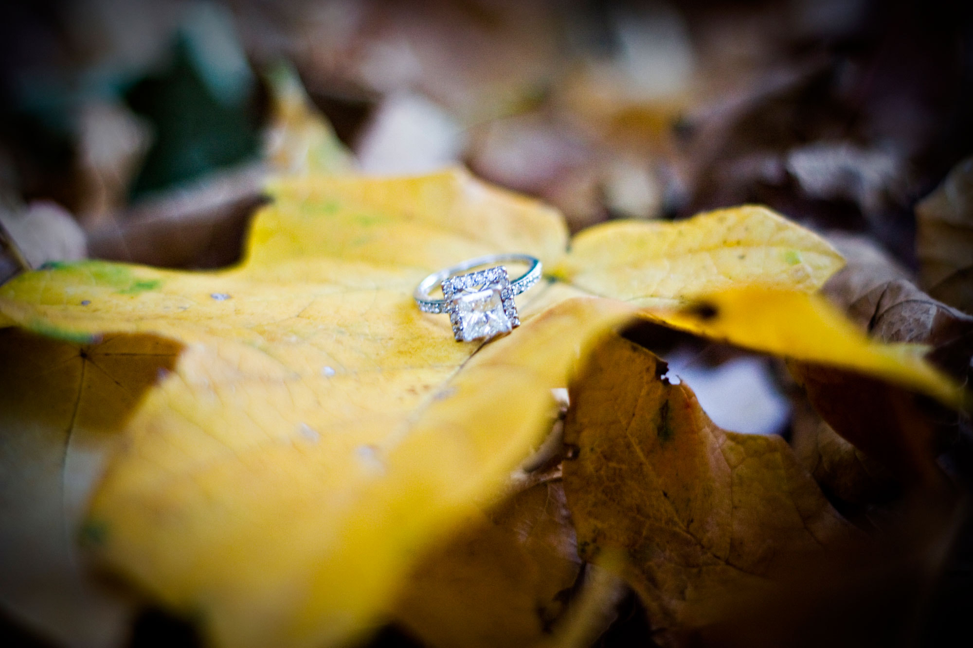 Photograph FALLing in love by Megan Hurt on 500px