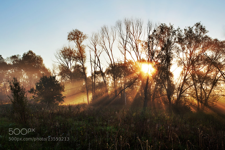 Photograph Foggy sunrise by Denis Belyaev on 500px