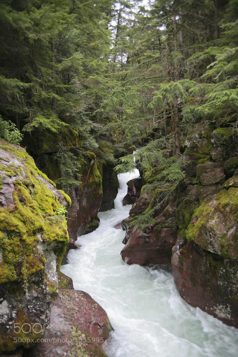 Photograph Peaceful Avalanche Creek by Larry Flynn on 500px
