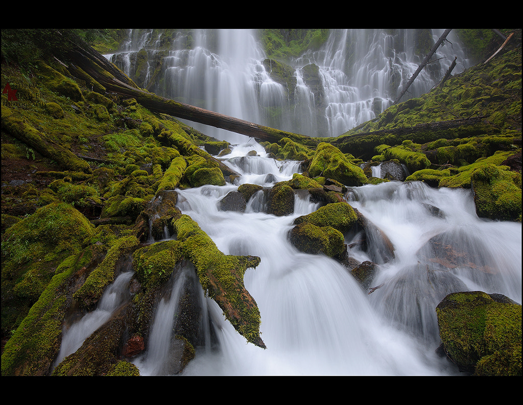 Photograph Proxy Falls summer rush.. by Andrew Kumler on 500px
