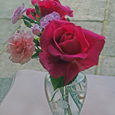 Rose and Carnations, Panasonic DMC-TZ19