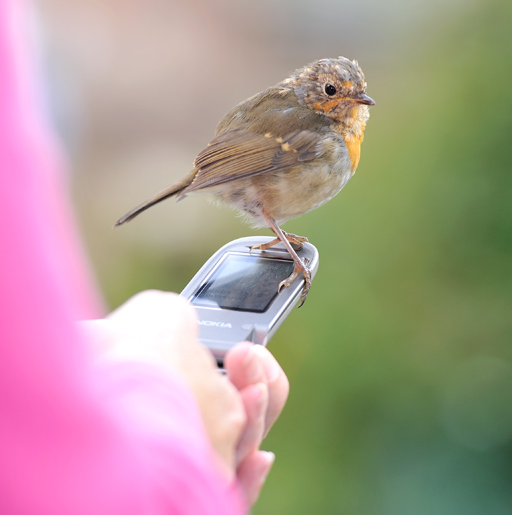 Photograph Robin on the phone by Kevin  Keatley on 500px