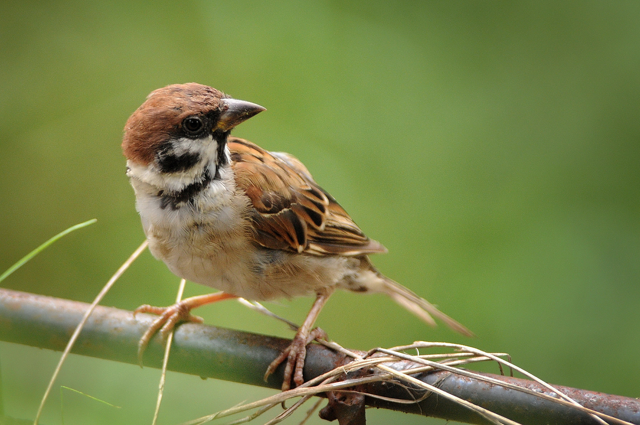 Photograph Request of sparrow? by KEN OHSAWA on 500px