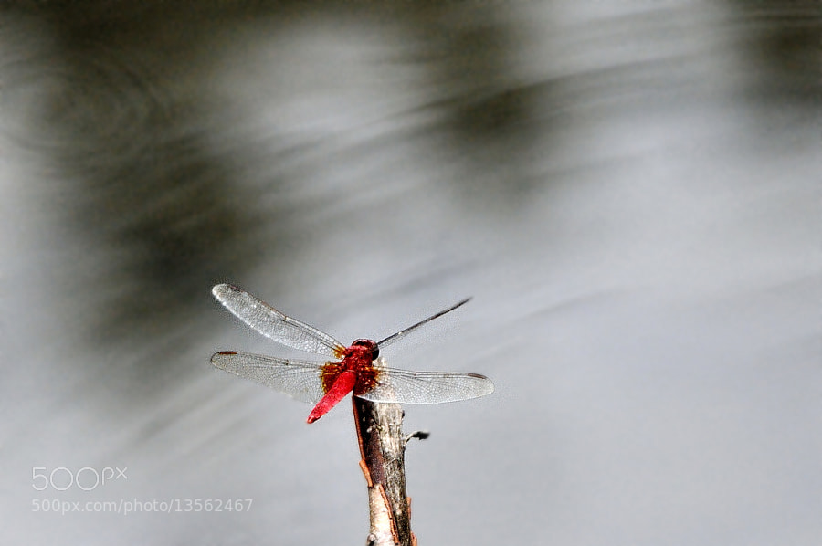 Photograph ☆ Red dragonfly appearance! by Ken Ohsawa on 500px