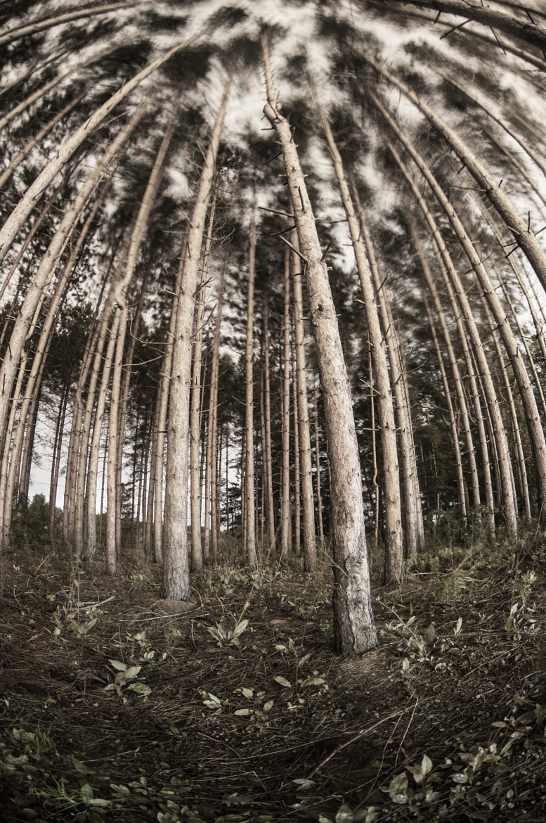Photograph trees by Dérick Tremblay on 500px
