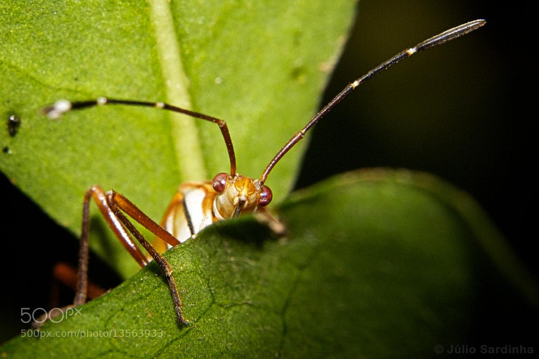 Photograph Hi Bug! by Júlio Sardinha on 500px