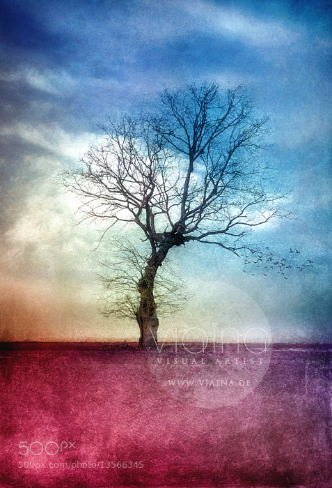 Photograph ATMOSPHERIC TREE by VIAINA ♛ on 500px