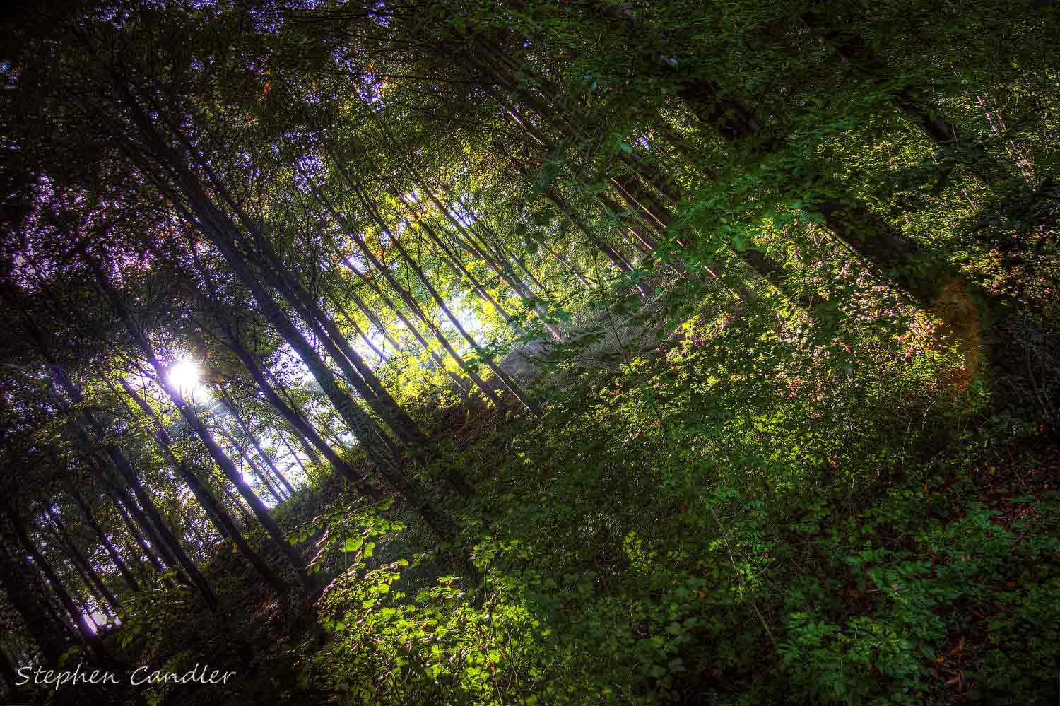 Photograph Through The Trees by Stephen Candler-Photography on 500px
