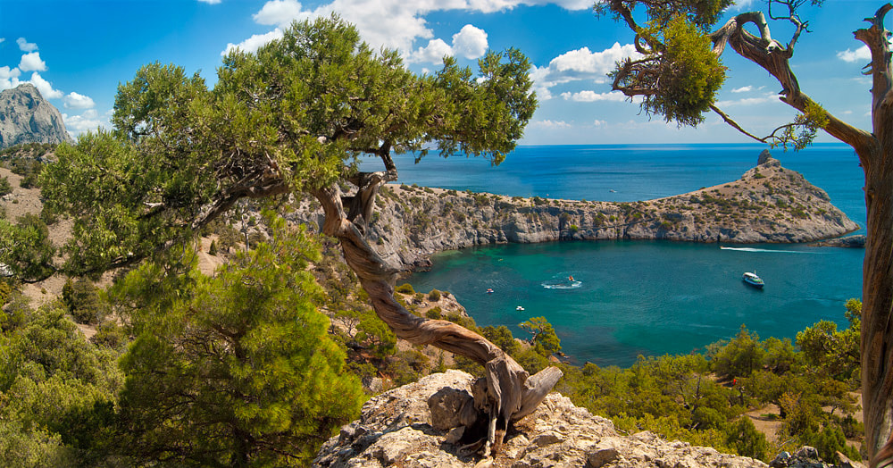 Photograph Crimea. Trees of the New World by Igor Svist on 500px