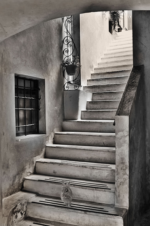 Photograph Up and down by anna paganoni on 500px