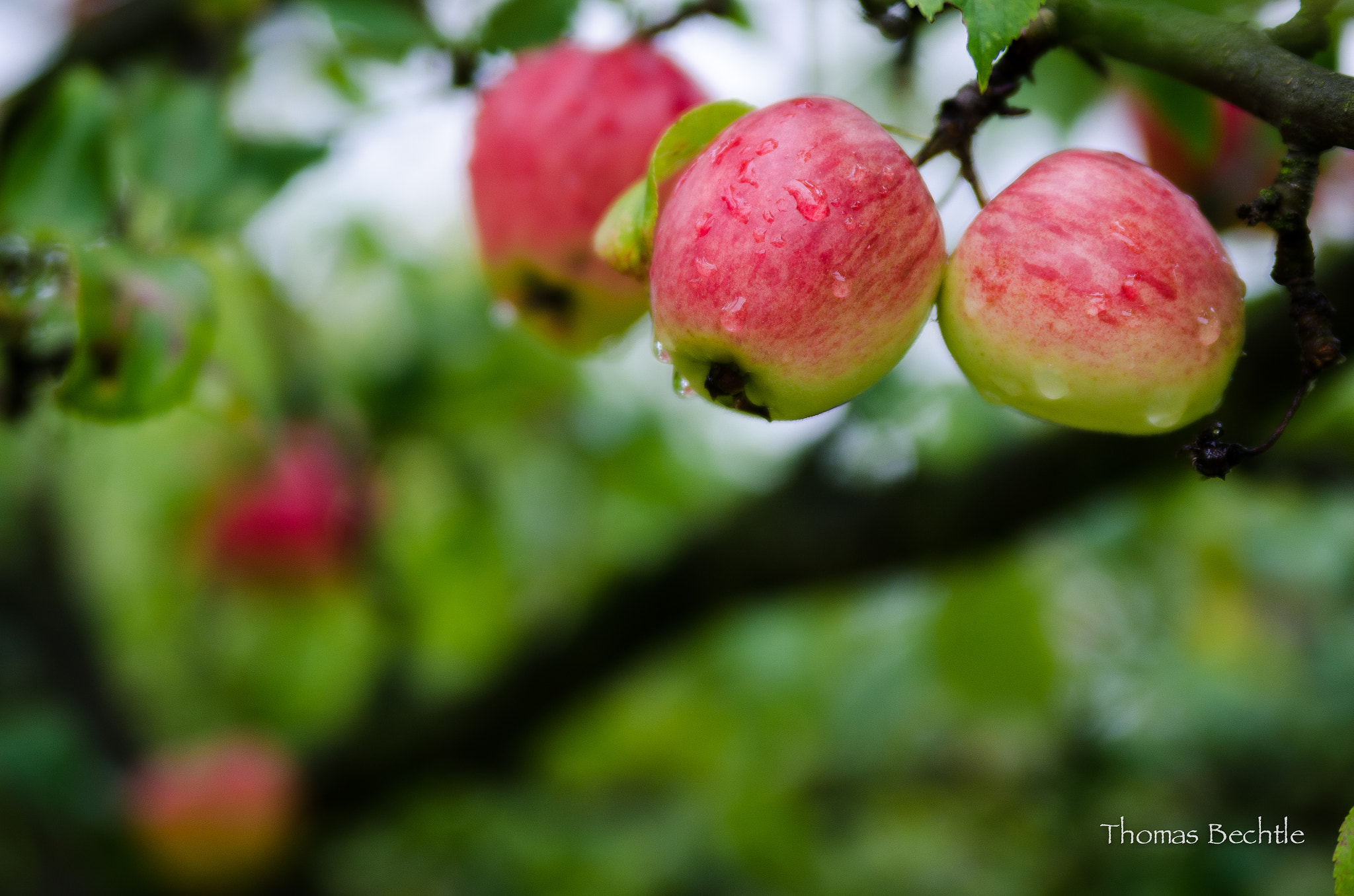 Photograph Under the apple tree by Thomas Bechtle on 500px