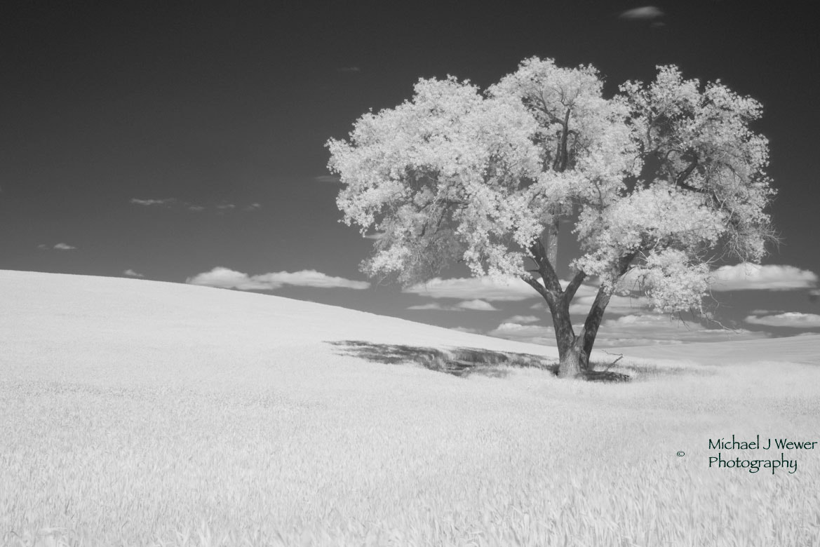 Photograph The Palouse by Michael Wewer on 500px