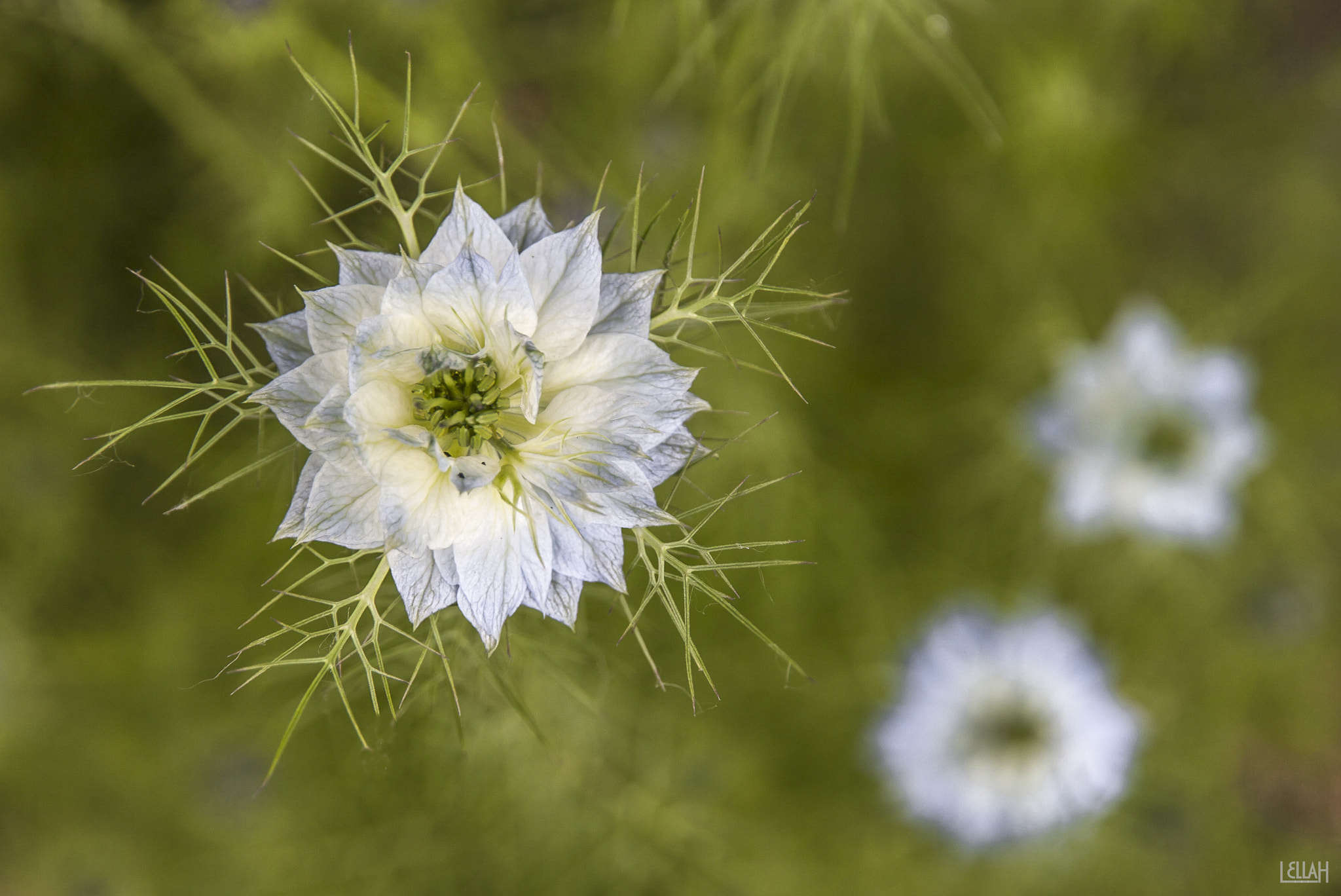 Photograph Blue star by Lella H on 500px