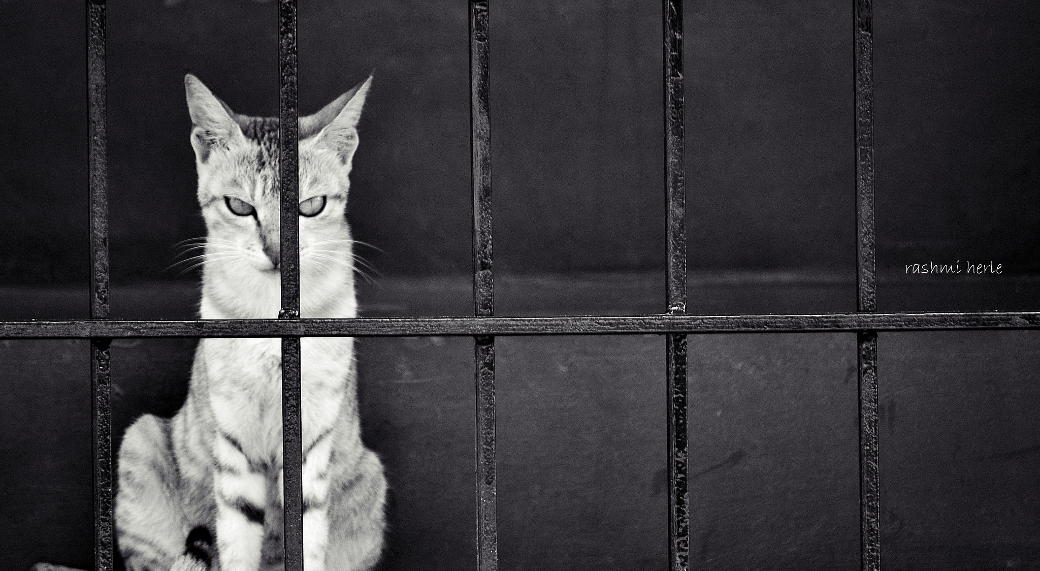 Photograph Behind Bars :D :D by Rashmi Herle on 500px