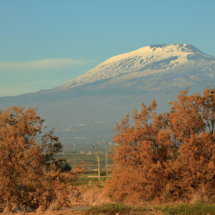 Mount Etna & golden trees, Canon EOS REBEL T6S, Sigma 70-300mm f/4-5.6 [APO] DG Macro