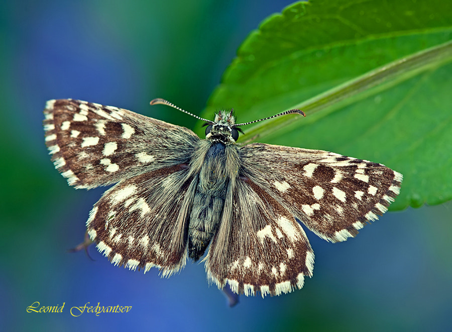 Photograph Resting On A Leaflet by Leonid Fedyantsev on 500px