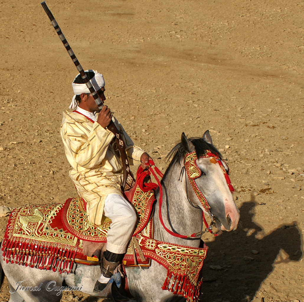 Photograph Horse and rider(2) by Jamal Ouguimi on 500px
