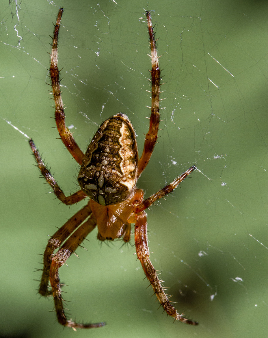 Photograph Small spider by Matic Zalaznik on 500px