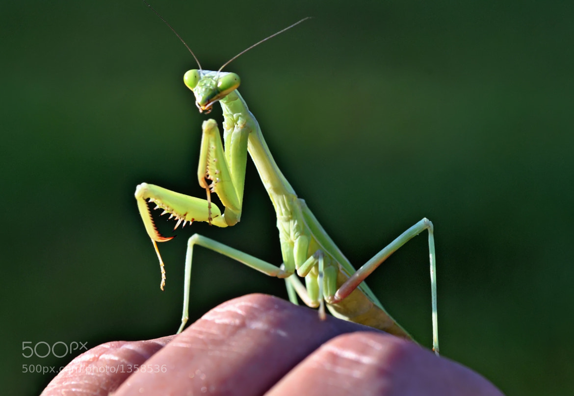 Photograph Green Alien by Jeff Clow on 500px