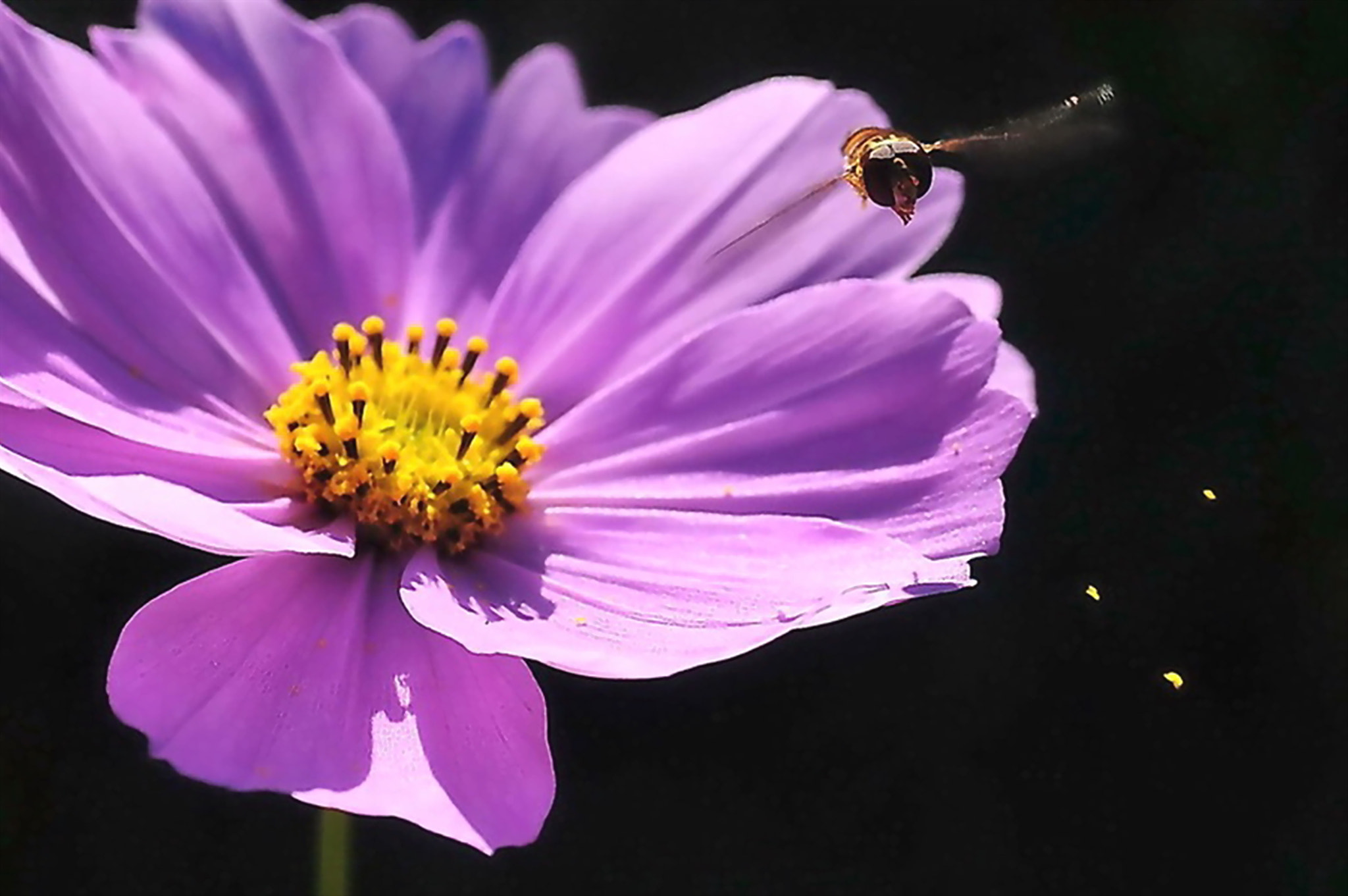 Photograph HonyBee flying in the cosmos -1 by KEN OHSAWA on 500px