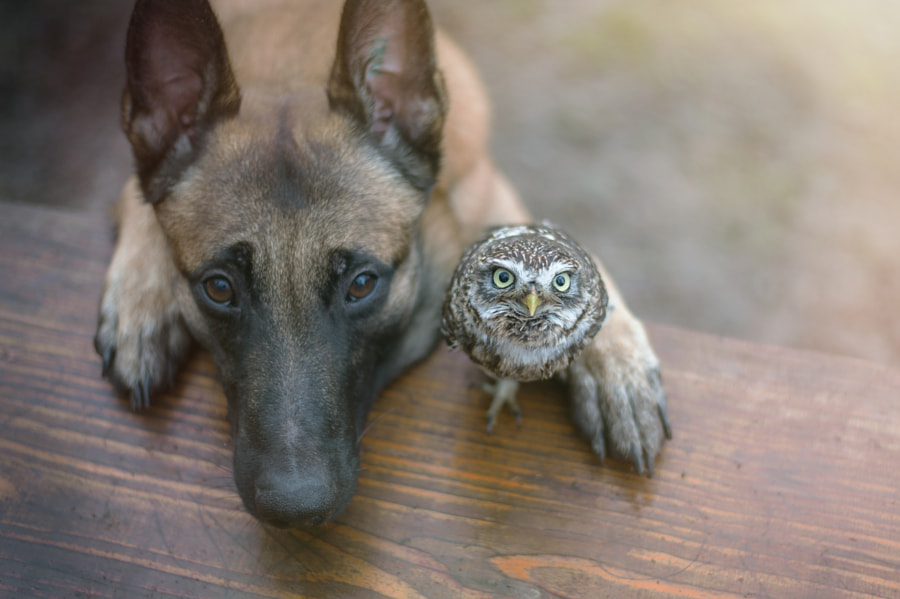 Weee ? by Tanja Brandt on 500px.com
