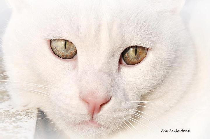Photograph My Pussycat... by Anita  Nunes on 500px