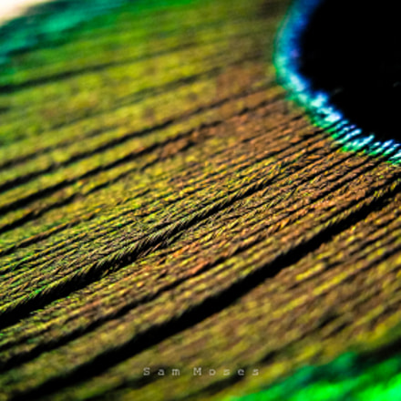 peacock feather macro, Canon POWERSHOT A2100 IS