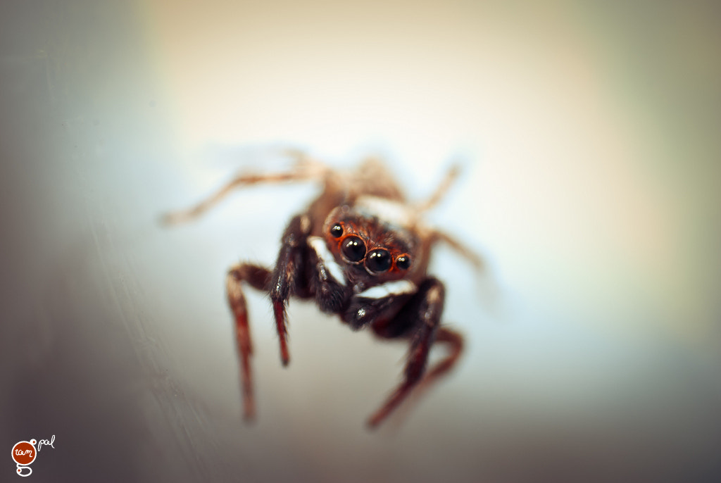 Photograph Spidy by ramgopal rajaram on 500px