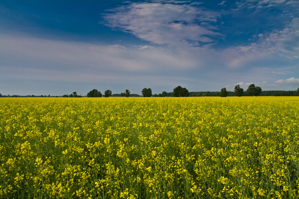 Photograph yellow and blue by elec foto on 500px