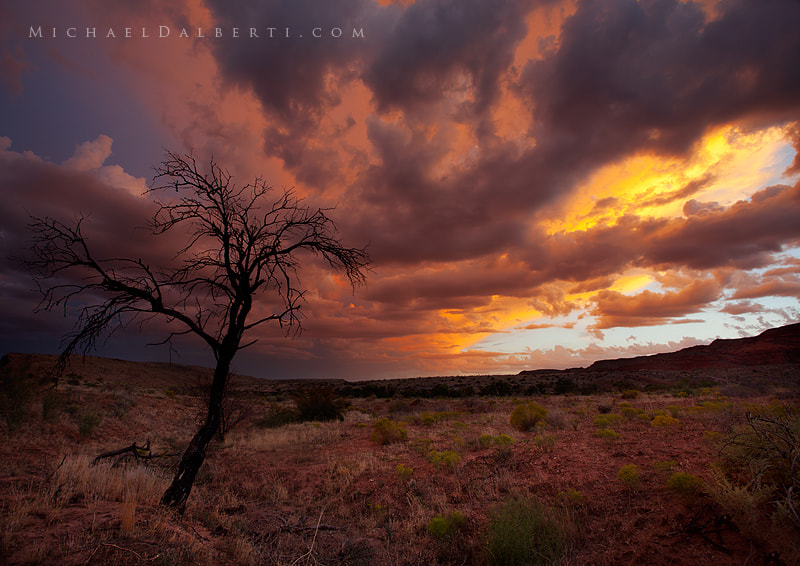 Photograph Nature's Canvas by Michael Dalberti on 500px