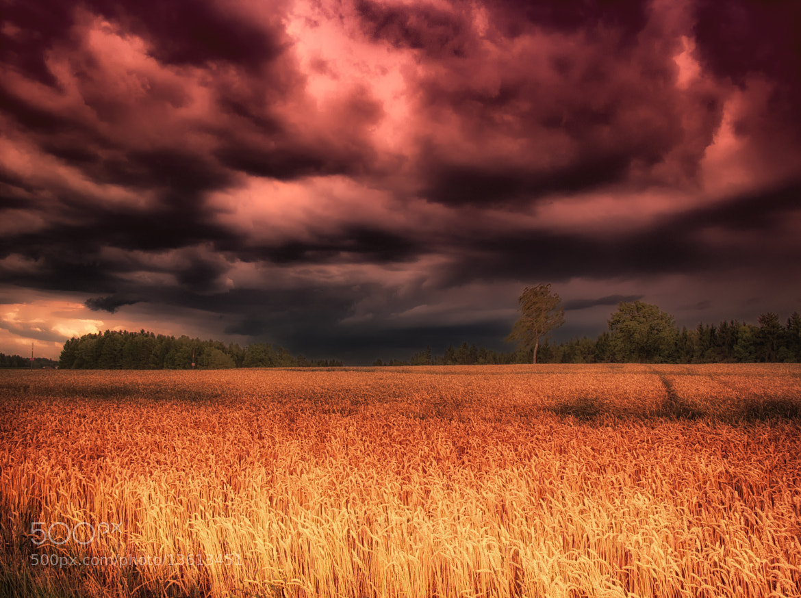 Photograph Blazing Skies by Georg Tueller on 500px