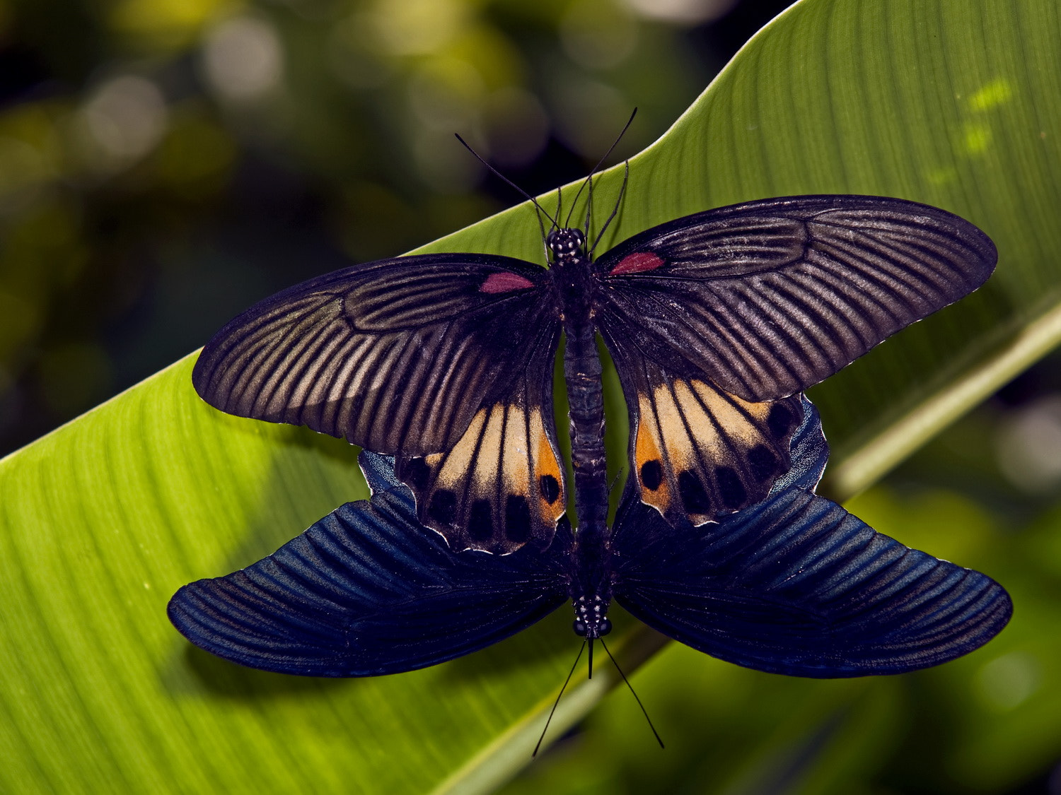 Photograph Butterfly #2 by SIJANTO NATURE on 500px