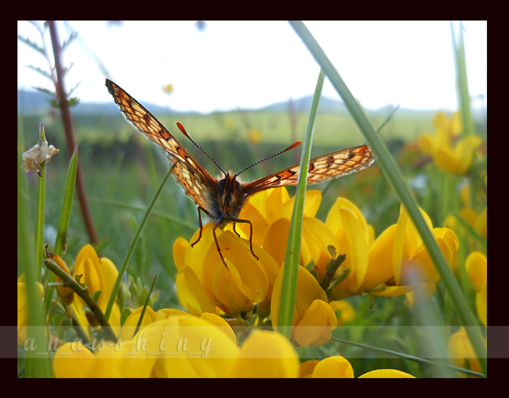 Photograph >>>in the grass<<< by Ana Mitić on 500px
