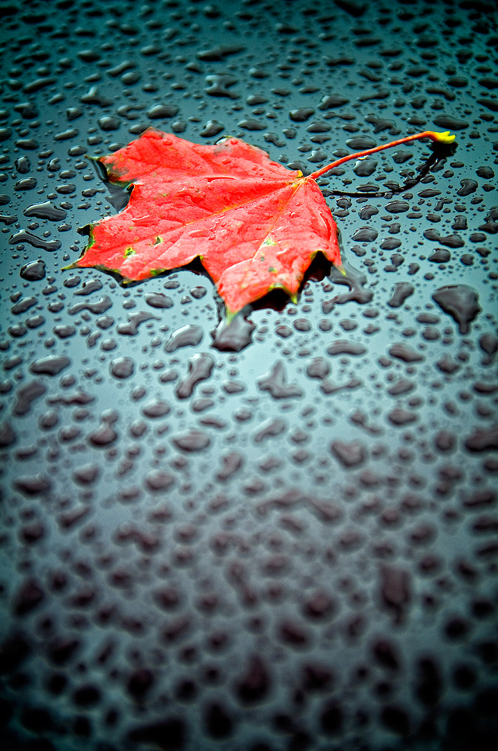 Photograph Leaf by Emil Nilsson on 500px