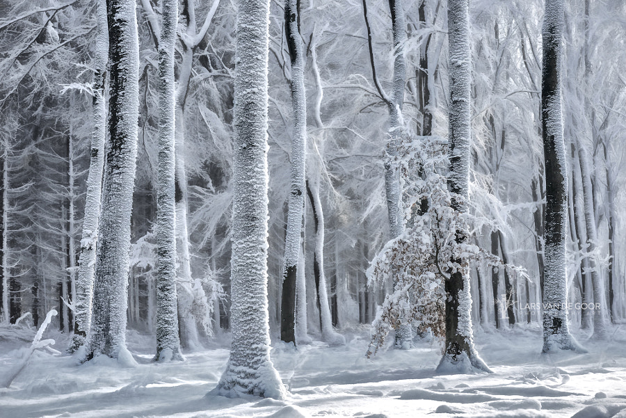 Cold is Coming by Lars van de Goor on 500px.com