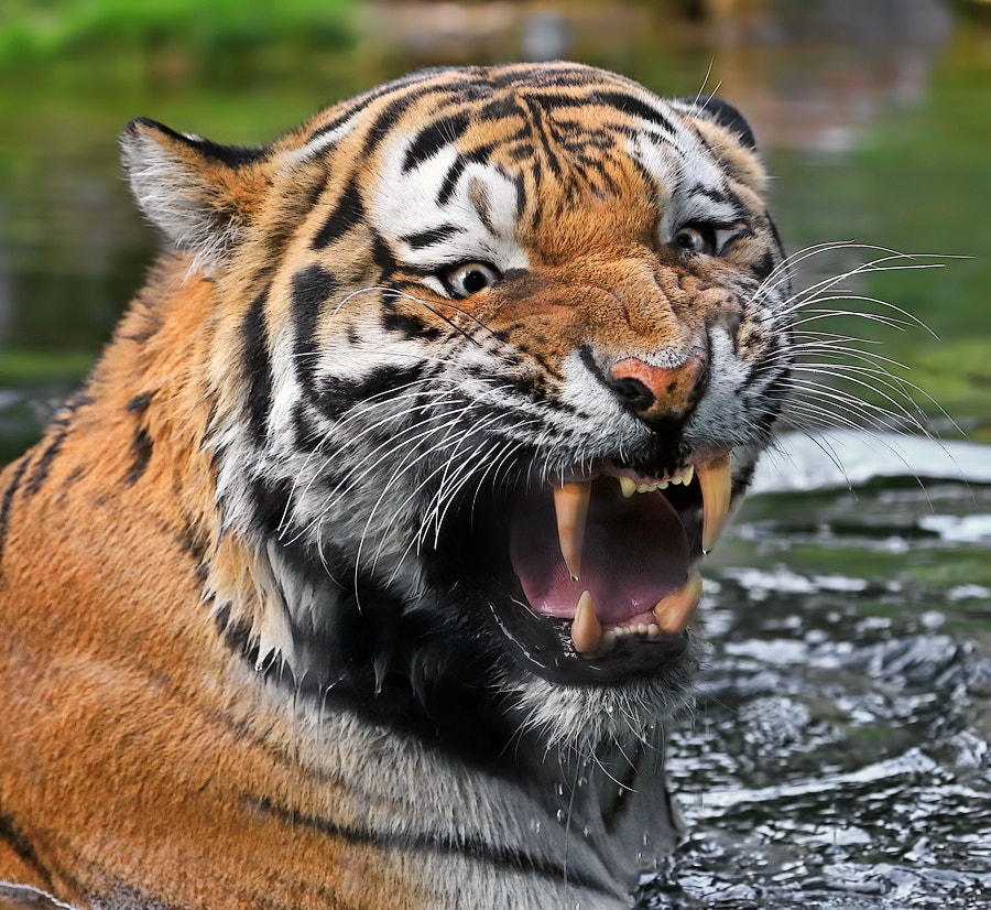Photograph Severe Warning! by Klaus Wiese on 500px