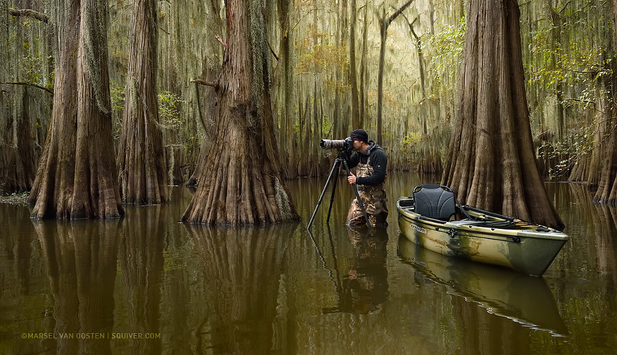 Into The Cypress Swamps by Marsel van Oosten on 500px.com