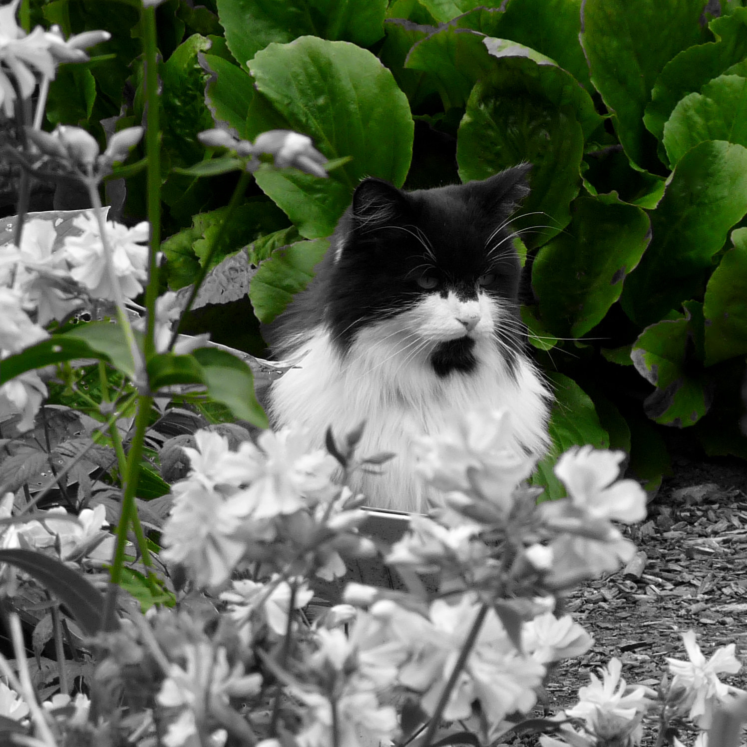 Photograph The cat in the Botanical gardens by Päivi Kaarina on 500px