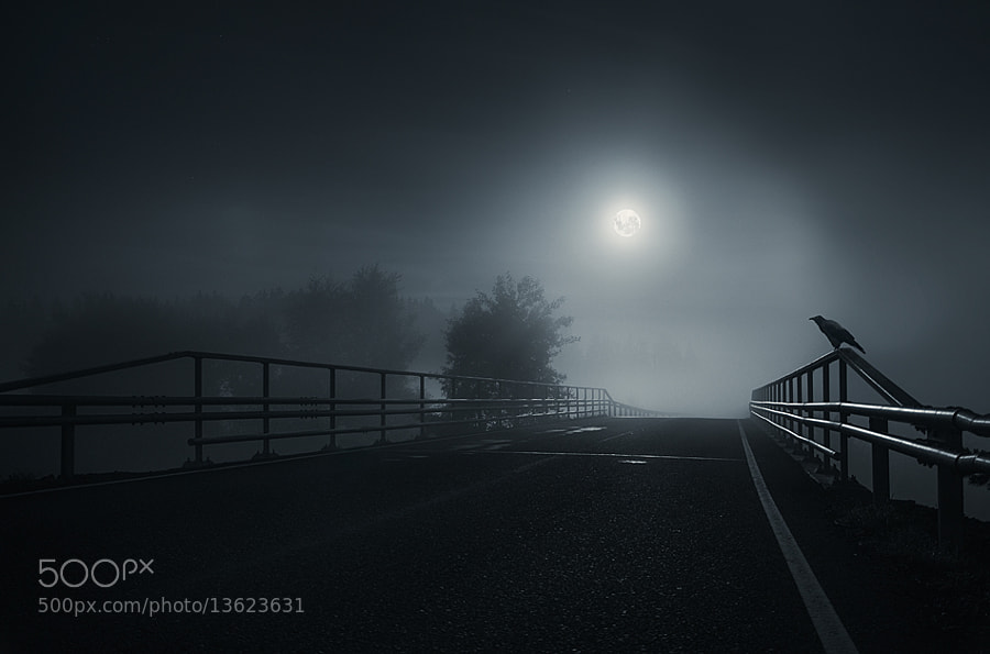 Photograph The crow by Mikko Lagerstedt on 500px