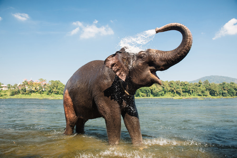 Elephant washing in the river by Dmytro Gilitukha on 500px.com