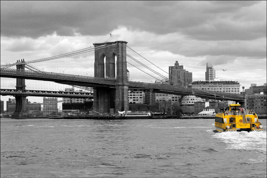 Water Taxi to Brooklyn