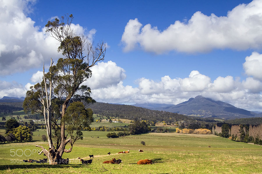 Photograph Bucolic by Peter Daalder on 500px