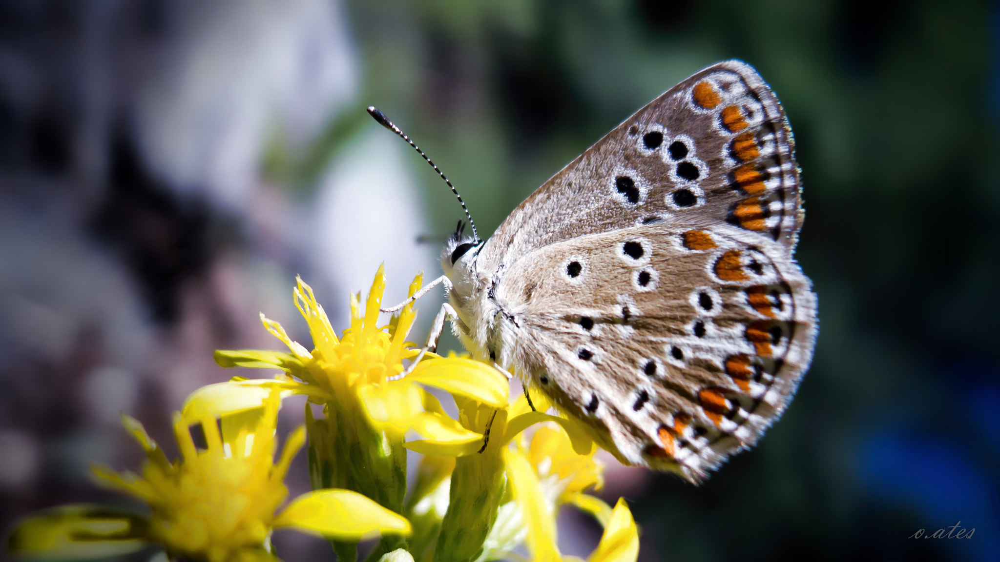 Photograph butterfly by onr A. on 500px